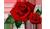 http://male4karolka.moy.su/Design/Valentine/Mini/stil5-mini.txt